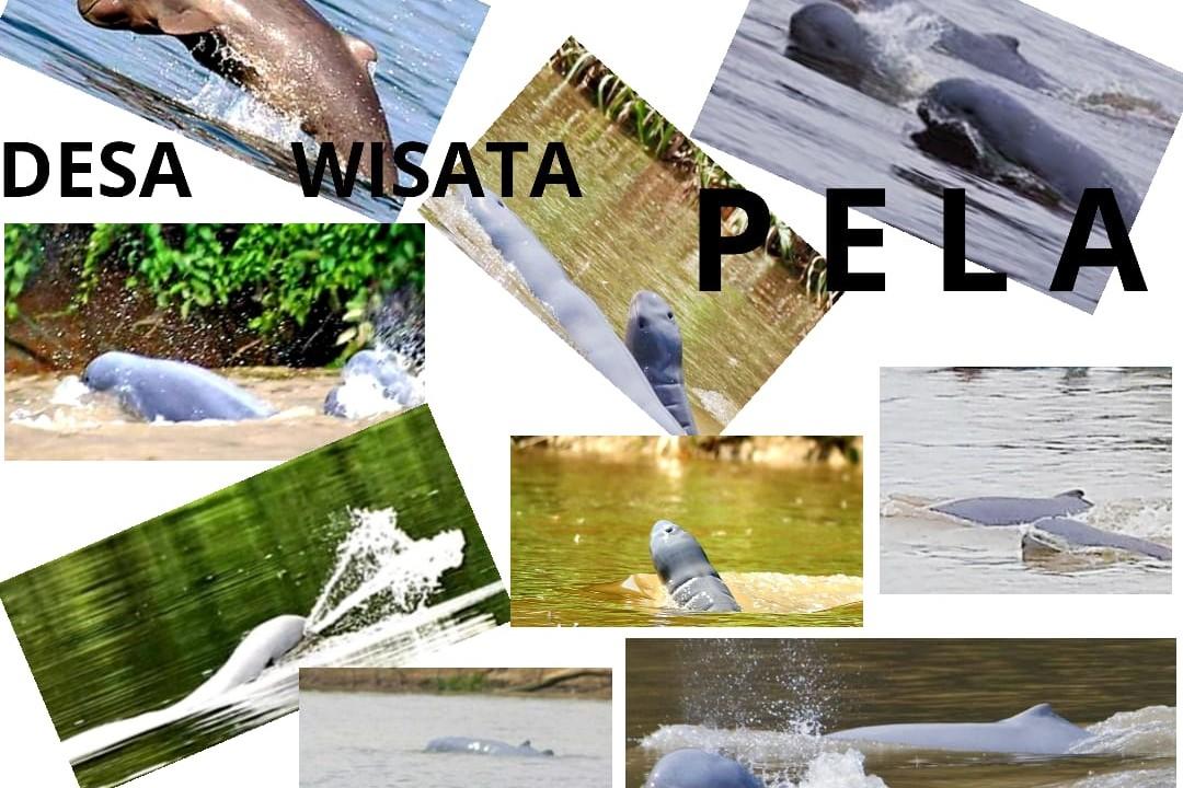 Produk_desa_wisata_pela_web-03.jpg